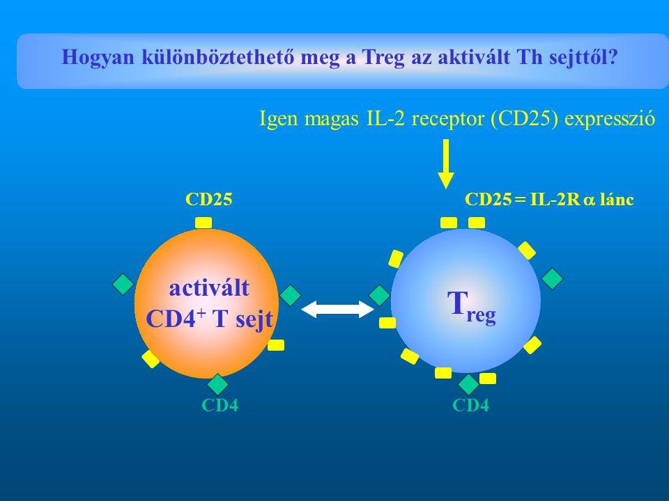 Hogyan különböztethető meg a Treg az aktivált Th sejttől? CD25 CD25 = IL-2R  lánc T reg activált CD4 + T sejt CD4 Igen magas IL-2 receptor (CD25) exp