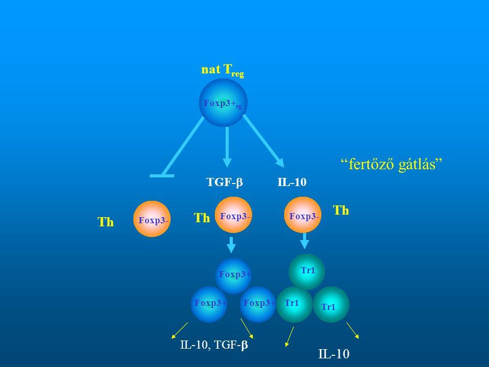 """Foxp3- TGF-  IL-10 Foxp3+ Tr1 Foxp3- Foxp3+ eg nat T reg Tr1 Foxp3+ Th """"fertőző gátlás"""" IL-10 IL-10, TGF- """