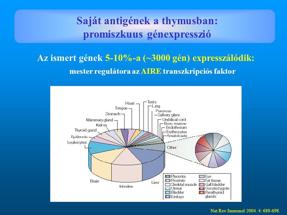 Nat Rev Immunol 2004. 4: 688-698. Saját antigének a thymusban: promiszkuus génexpresszió Az ismert gének 5-10%-a (~3000 gén) expresszálódik: mester re