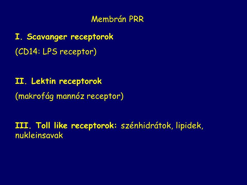 I. Scavanger receptorok (CD14: LPS receptor) II.