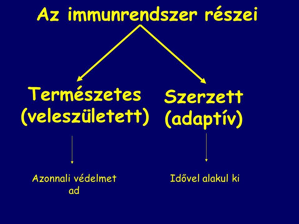 Az immunrendszer részei Természetes (veleszületett) Szerzett (adaptív) Azonnali védelmet ad Idővel alakul ki