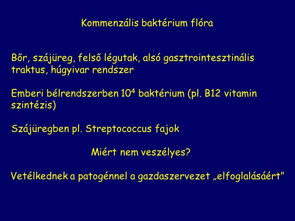 Kommenzális baktérium flóra Bőr, szájüreg, felső légutak, alsó gasztrointesztinális traktus, húgyivar rendszer Emberi bélrendszerben 10 4 baktérium (pl.