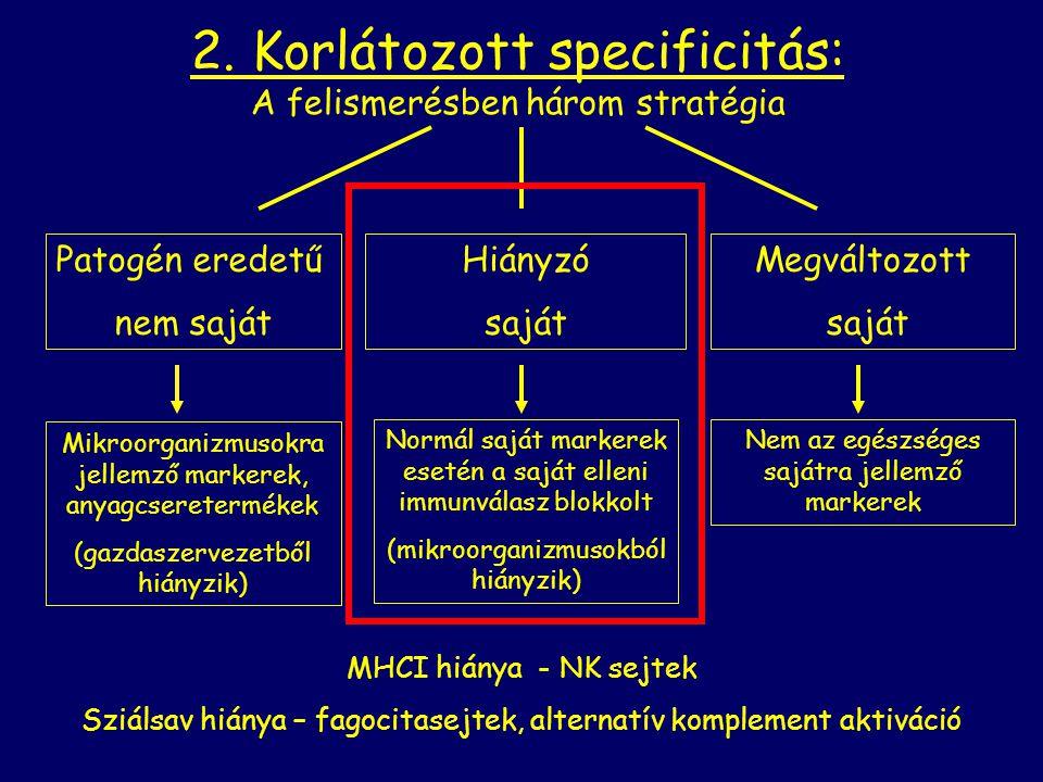 2. Korlátozott specificitás: A felismerésben három stratégia Patogén eredetű nem saját Megváltozott saját Hiányzó saját Mikroorganizmusokra jellemző m