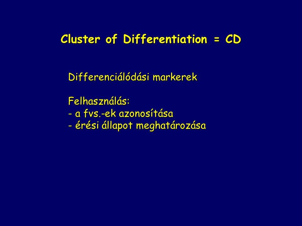 Cluster of Differentiation = CD Differenciálódási markerek Felhasználás: - a fvs.-ek azonosítása - érési állapot meghatározása