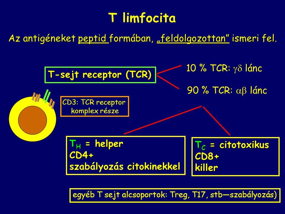 """T limfocita Az antigéneket peptid formában, """"feldolgozottan"""" ismeri fel. T-sejt receptor (TCR) T H = helper CD4+ citokinekkel szabályozás citokinekkel"""