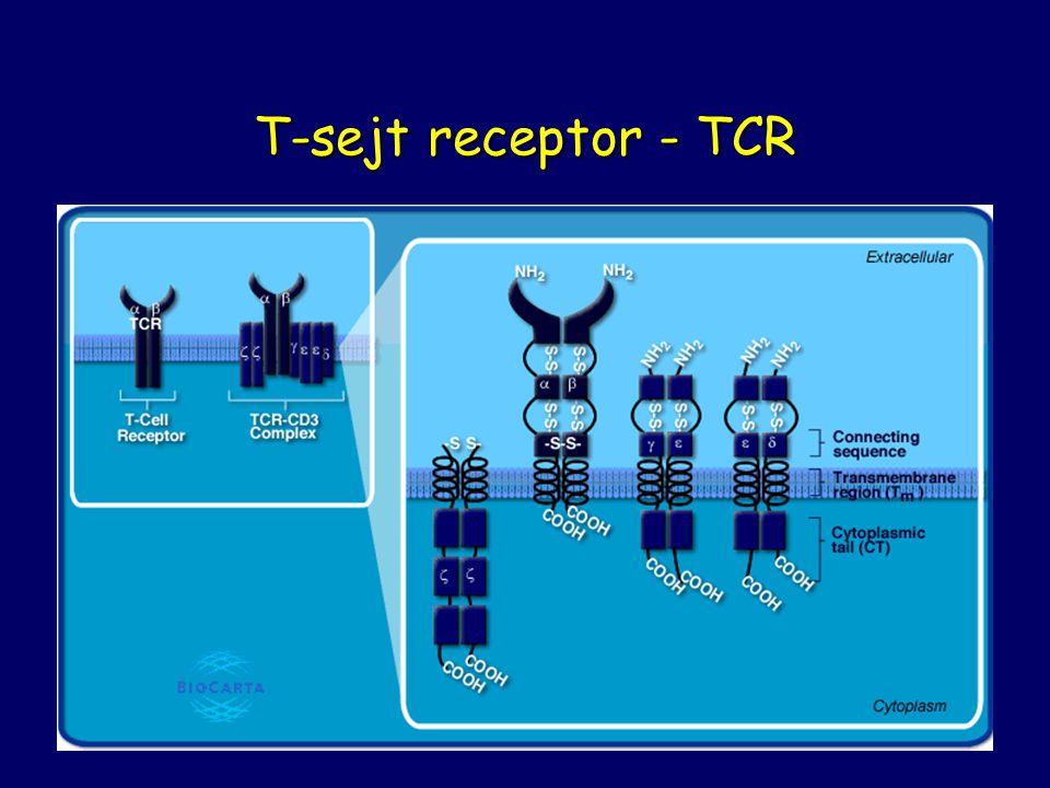 T-sejt receptor - TCR