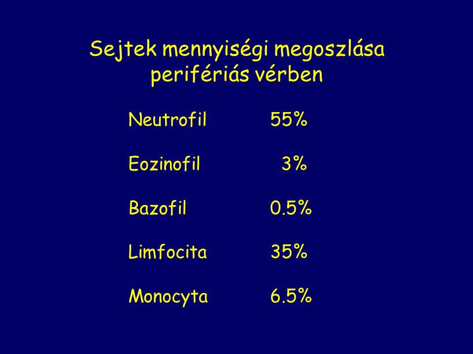 Sejtek mennyiségi megoszlása perifériás vérben Neutrofil55% Eozinofil 3% Bazofil0.5% Limfocita35% Monocyta6.5%