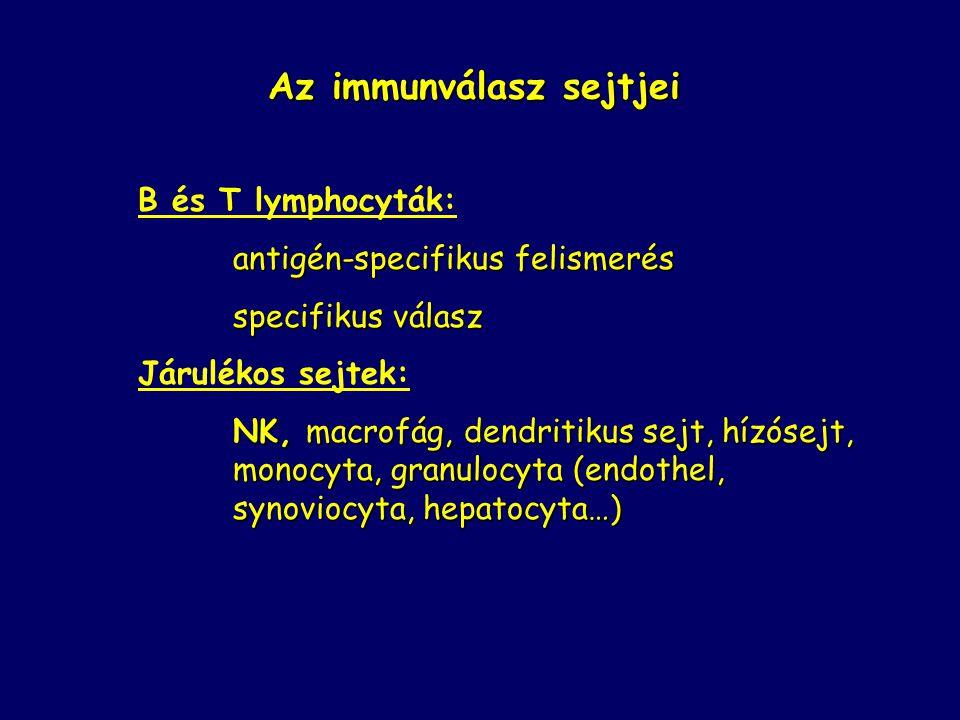 Az immunválasz sejtjei B és T lymphocyták: antigén-specifikus felismerés specifikus válasz Járulékos sejtek: NK, macrofág, dendritikus sejt, hízósejt,