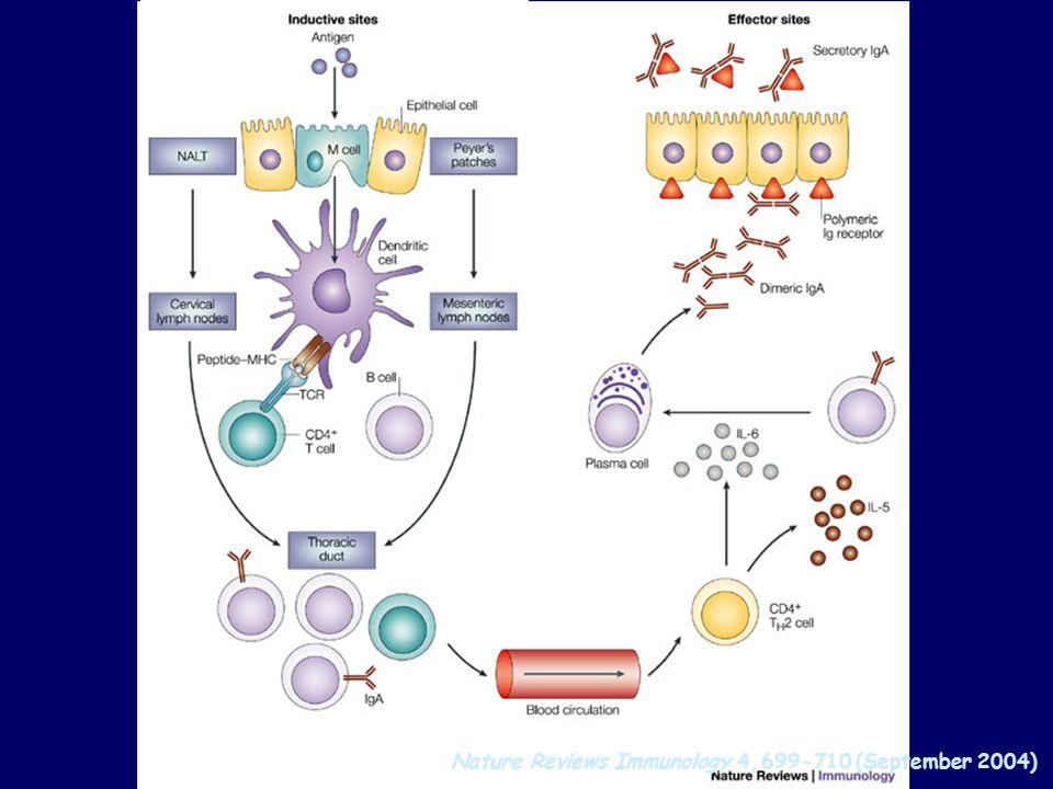 Nature Reviews Immunology 4, 699-710 (September 2004)