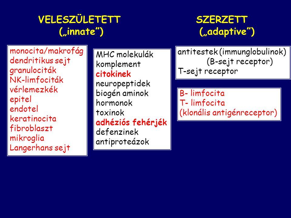 """VELESZÜLETETT SZERZETT (""""innate"""") (""""adaptive"""") MHC molekulák komplement citokinek neuropeptidek biogén aminok hormonok toxinok adhéziós fehérjék defen"""