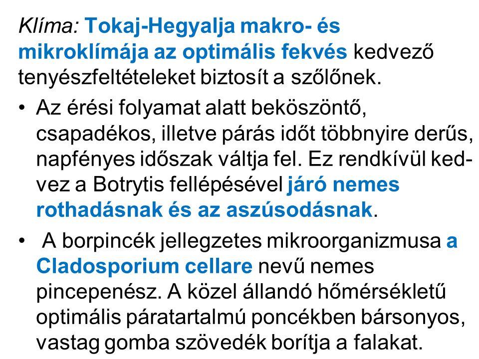 Klíma: Tokaj-Hegyalja makro- és mikroklímája az optimális fekvés kedvező tenyészfeltételeket biztosít a szőlőnek.