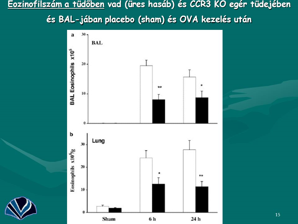 15 Eozinofilszám a tüdőben vad (üres hasáb) és CCR3 KO egér tüdejében és BAL-jában placebo (sham) és OVA kezelés után CCR3 KO