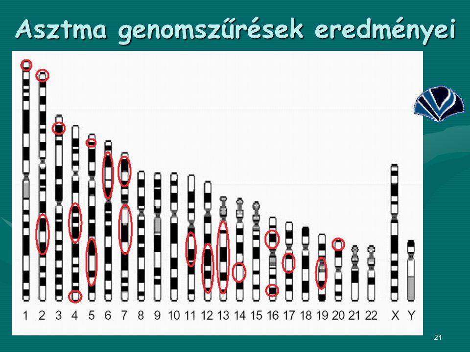 24 Asztma genomszűrések eredményei