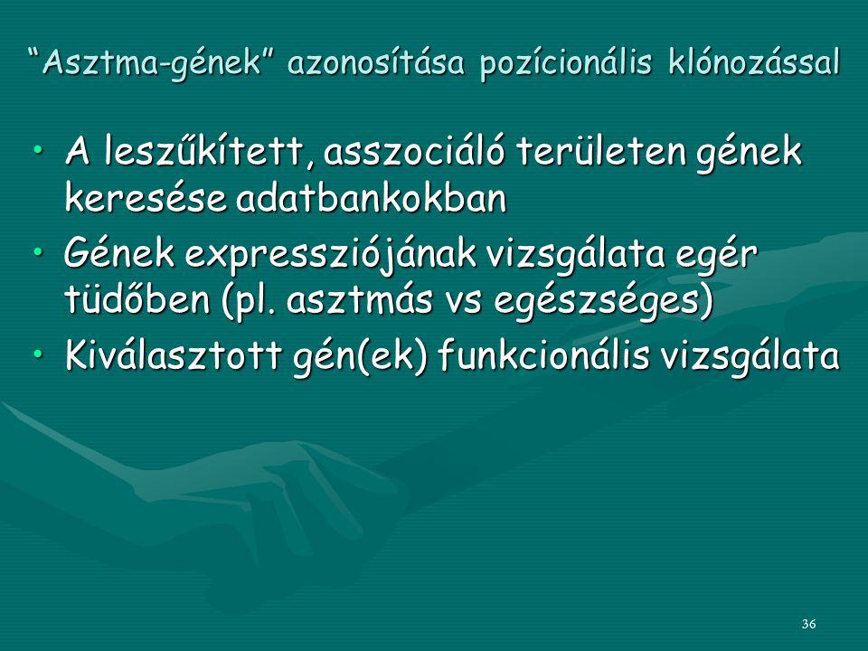 """36 """"Asztma-gének"""" azonosítása pozícionális klónozással A leszűkített, asszociáló területen gének keresése adatbankokbanA leszűkített, asszociáló terül"""