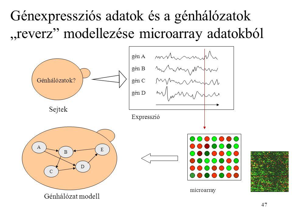 """47 Sejtek Génhálózatok? gén A gén B gén C gén D Expresszió microarray Génhálózat modell A B E C D Génexpressziós adatok és a génhálózatok """"reverz"""" mod"""