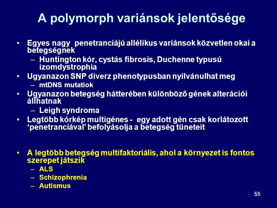 55 A polymorph variánsok jelentősége Egyes nagy penetranciájú allélikus variánsok közvetlen okai a betegségnek –Huntington kór, cystás fibrosis, Duche
