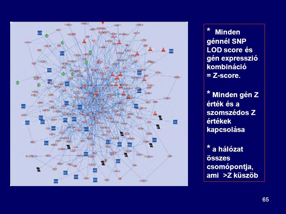 65 * Minden génnél SNP LOD score és gén expresszió kombináció = Z-score. * Minden gén Z érték és a szomszédos Z értékek kapcsolása * a hálózat összes
