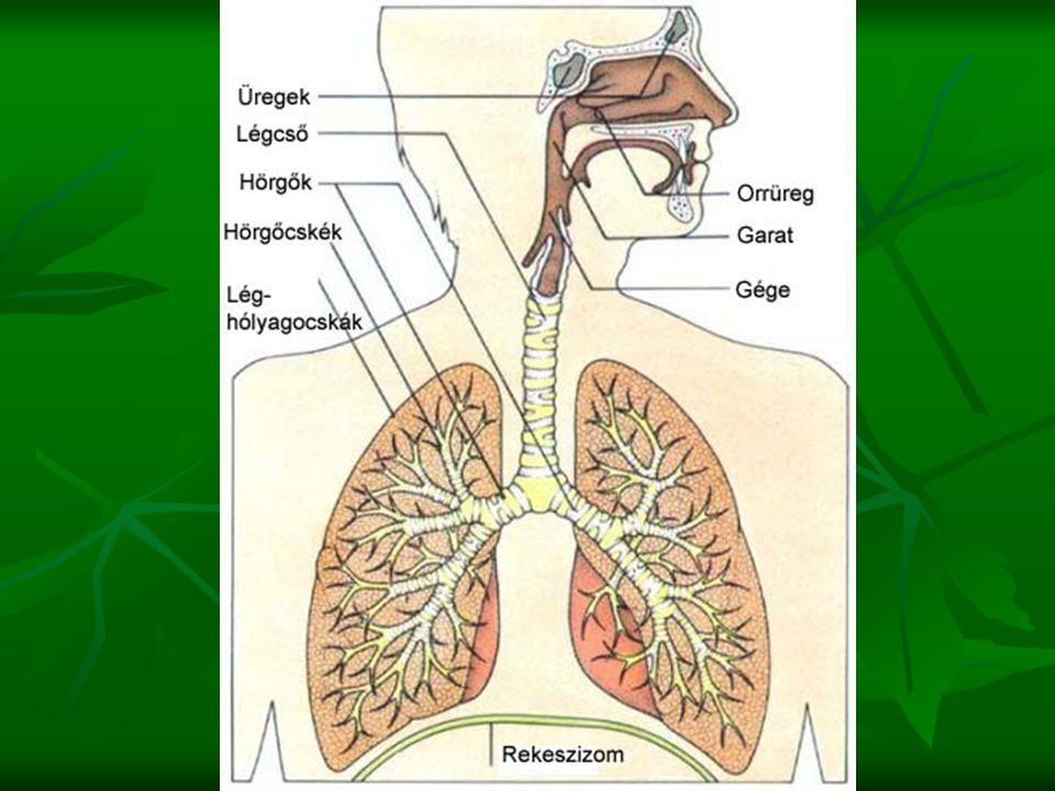 A légszennyezés A légszennyezés folyamata: emisszió - kibocsátás transzmisszió - a szennyező anyagok terjedése imisszió - a levegő minősége (= a levegő szennyezettsége) Szilárd szennyezők Légnemű szennyezők Szmog (redukáló, London típusú; oxidáló, Los Angeles típusú) Lakásokon belüli egészségkárosító anyagok Üvegházhatás Ózonlyuk