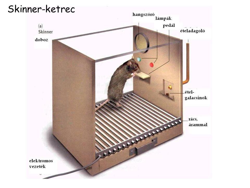Skinner-ketrec