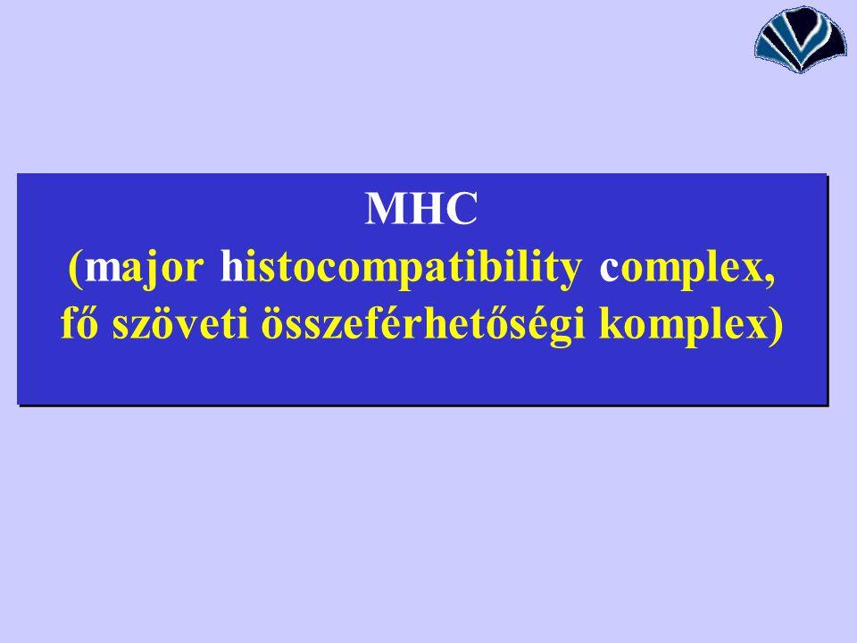 MHC (major histocompatibility complex, fő szöveti összeférhetőségi komplex)