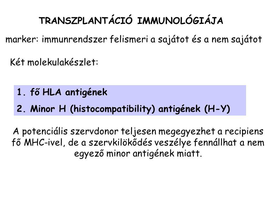 TRANSZPLANTÁCIÓ IMMUNOLÓGIÁJA 1. fő HLA antigének 2. Minor H (histocompatibility) antigének (H-Y) marker: immunrendszer felismeri a sajátot és a nem s