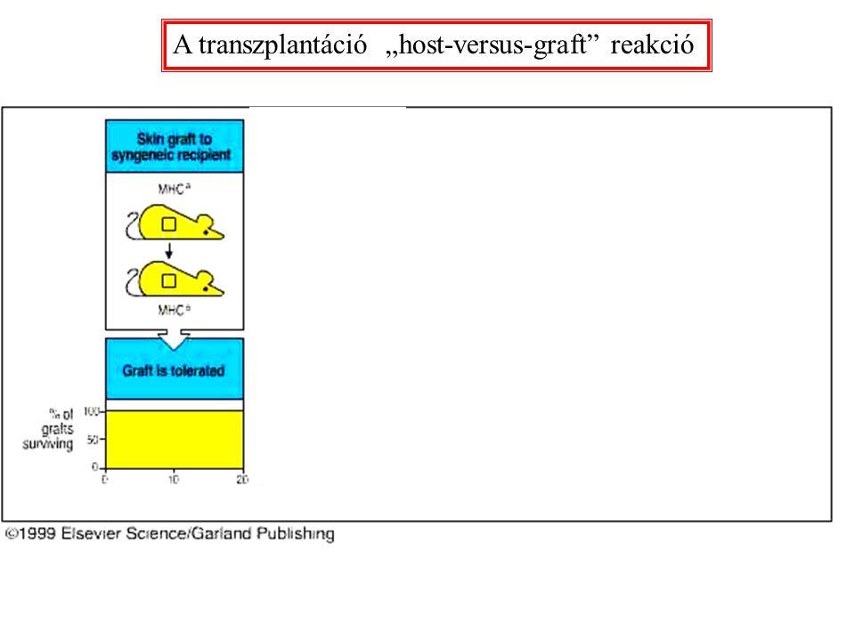 """A transzplantáció """"host-versus-graft"""" reakció"""