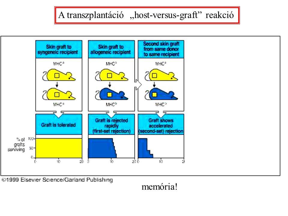 """A transzplantáció """"host-versus-graft"""" reakció memória!"""