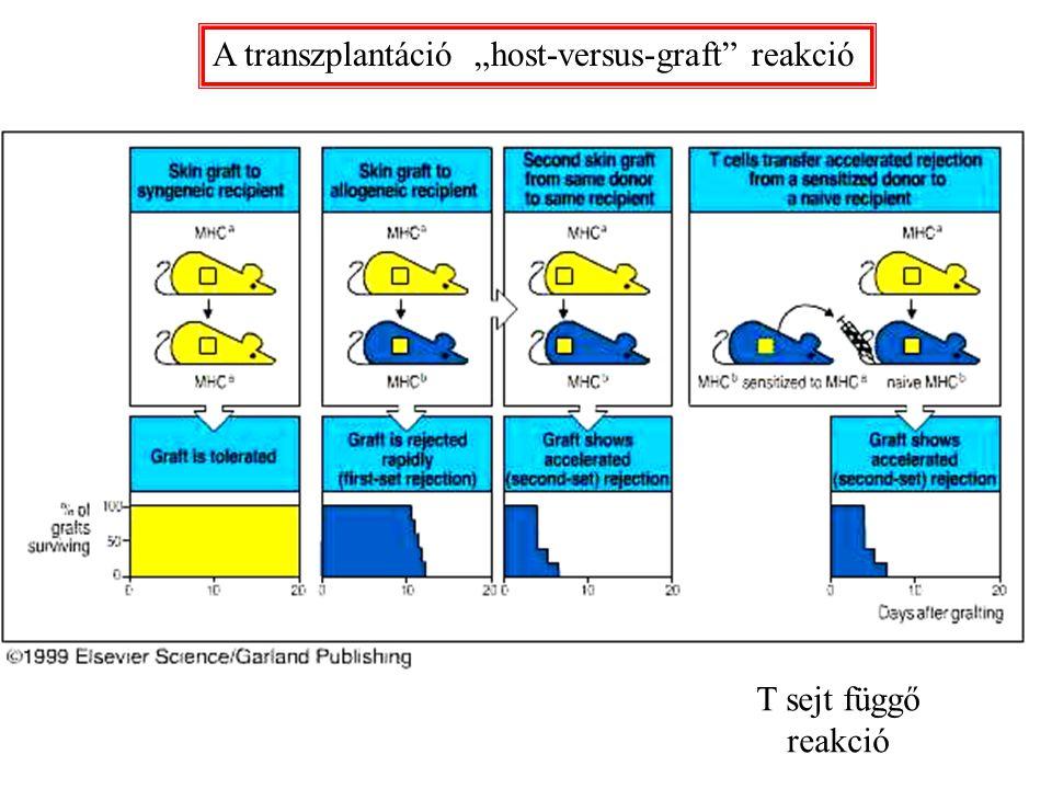 """A transzplantáció """"host-versus-graft"""" reakció T sejt függő reakció"""