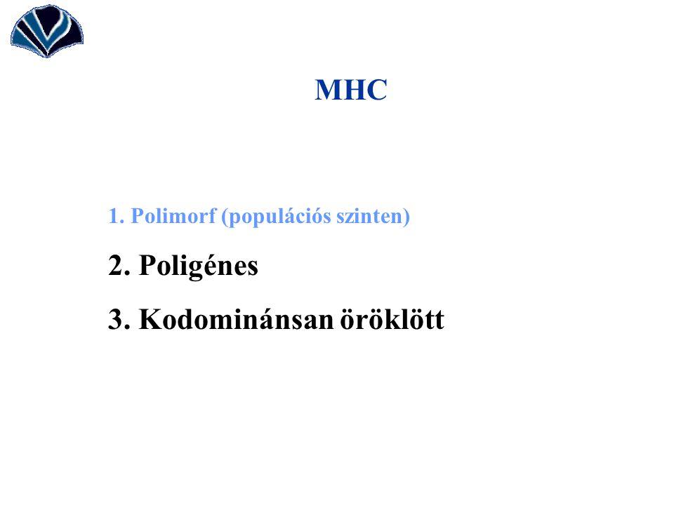 MHC 1. Polimorf (populációs szinten) 2. Poligénes 3. Kodominánsan öröklött