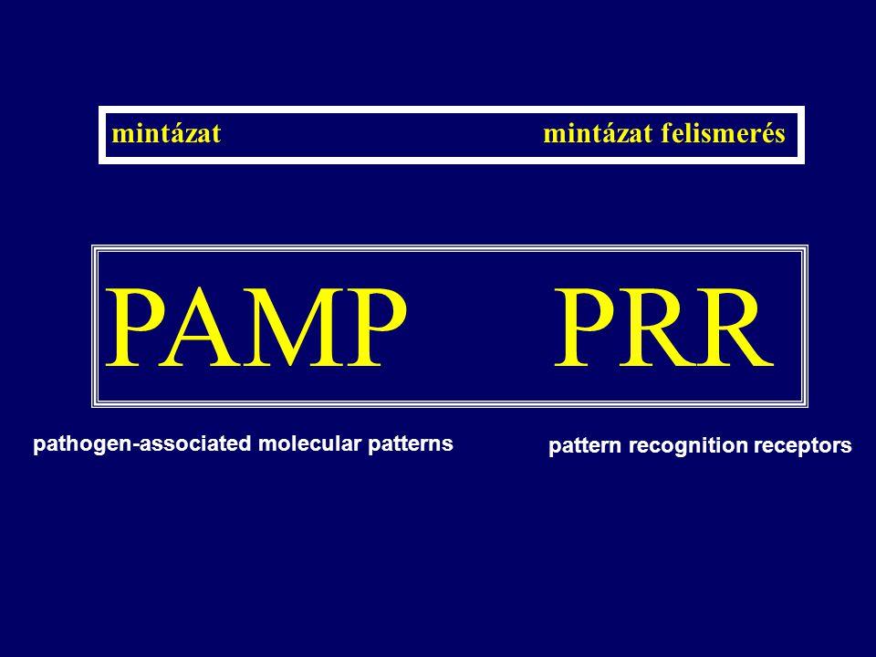 PAMP PRR mintázat mintázat felismerés pathogen-associated molecular patterns pattern recognition receptors