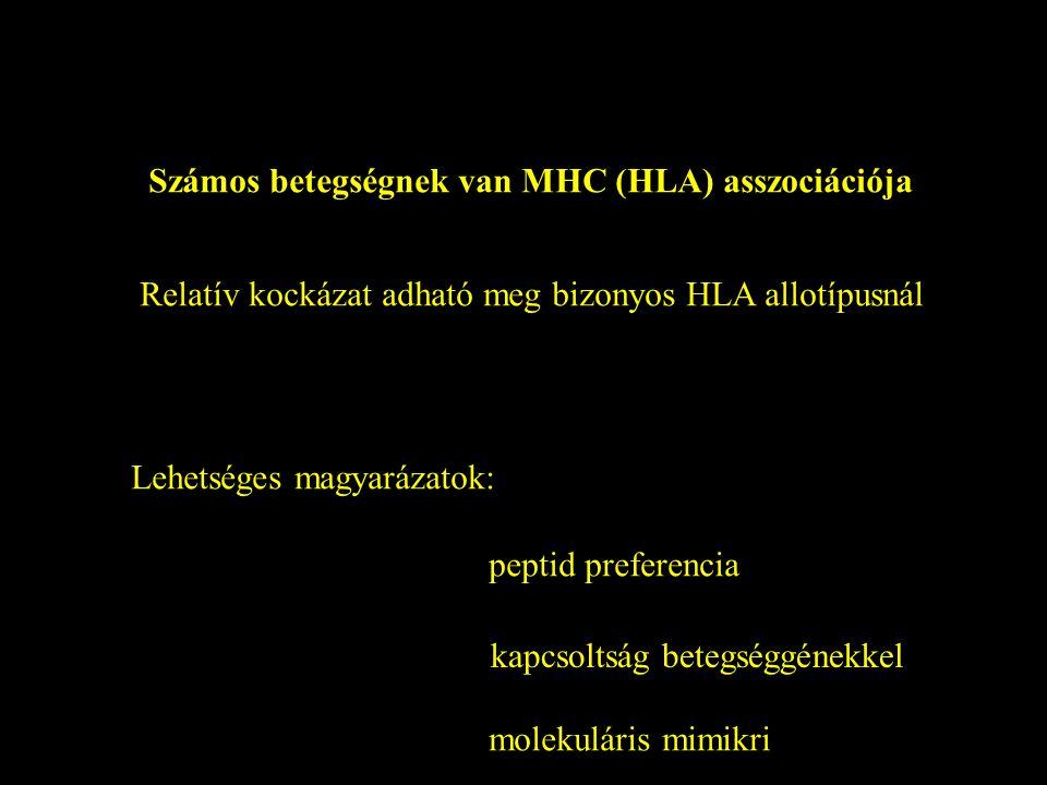 Számos betegségnek van MHC (HLA) asszociációja Relatív kockázat adható meg bizonyos HLA allotípusnál Lehetséges magyarázatok: peptid preferencia kapcs