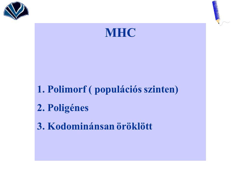 MHC 1. Polimorf ( populációs szinten) 2. Poligénes 3. Kodominánsan öröklött