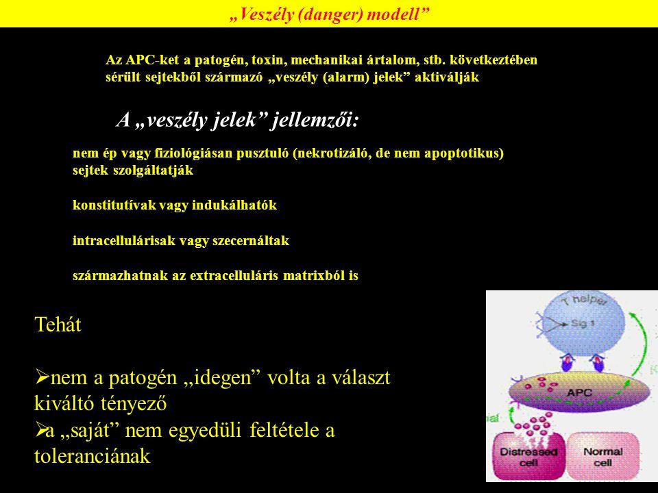 """MHC-II (HLA DR, PD or DQ) """"nyitott gödör 11-20 aminosav"""
