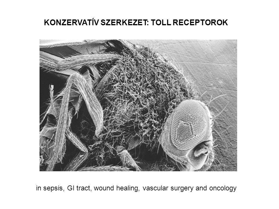 KONZERVATÍV SZERKEZET: TOLL RECEPTOROK in sepsis, GI tract, wound healing, vascular surgery and oncology
