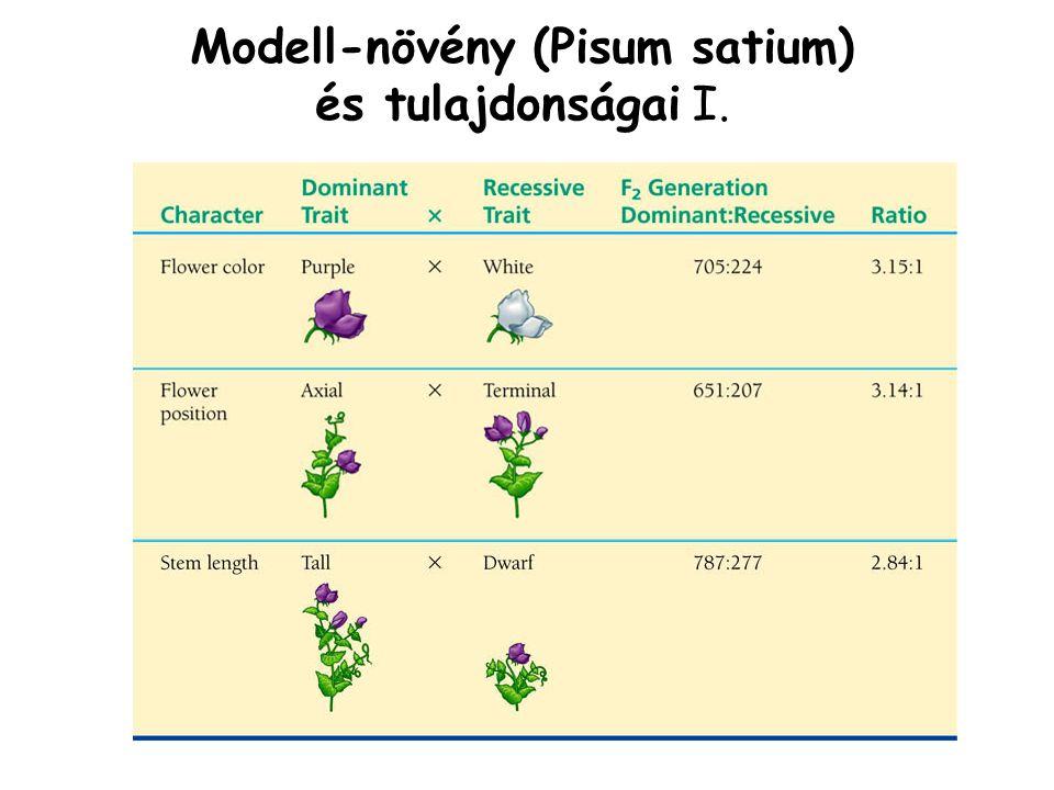 Modell-növény (Pisum satium) és tulajdonságai I.