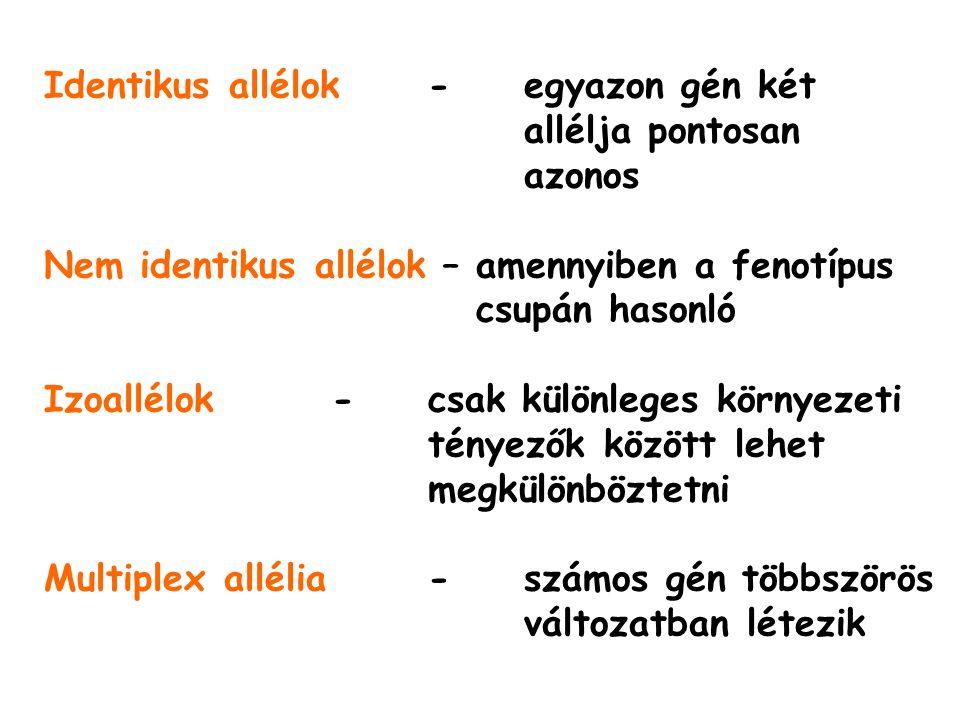 Identikus allélok- egyazon gén két allélja pontosan azonos Nem identikus allélok – amennyiben a fenotípus csupán hasonló Izoallélok- csak különleges környezeti tényezők között lehet megkülönböztetni Multiplex allélia- számos gén többszörös változatban létezik