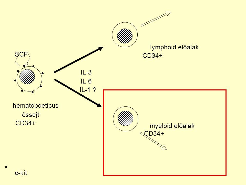 SCF IL-3 IL-6 IL-1 ? hematopoeticus ôssejt lymphoid elôalak myeloid elôalak c-kit CD34+