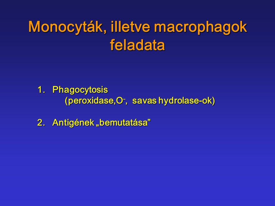 """Monocyták, illetve macrophagok feladata 1. Phagocytosis (peroxidase,O -, savas hydrolase-ok) 2. Antigének """"bemutatása"""""""