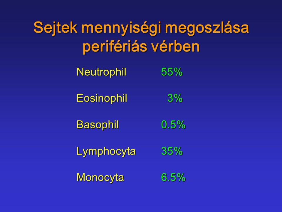 Sejtek mennyiségi megoszlása perifériás vérben Neutrophil55% Eosinophil 3% Basophil0.5% Lymphocyta35% Monocyta6.5%