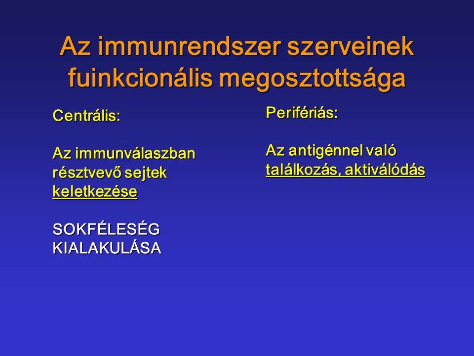 Az immunrendszer szerveinek fuinkcionális megosztottsága Centrális: Az immunválaszban résztvevő sejtek keletkezéseSOKFÉLESÉGKIALAKULÁSA Perifériás: Az