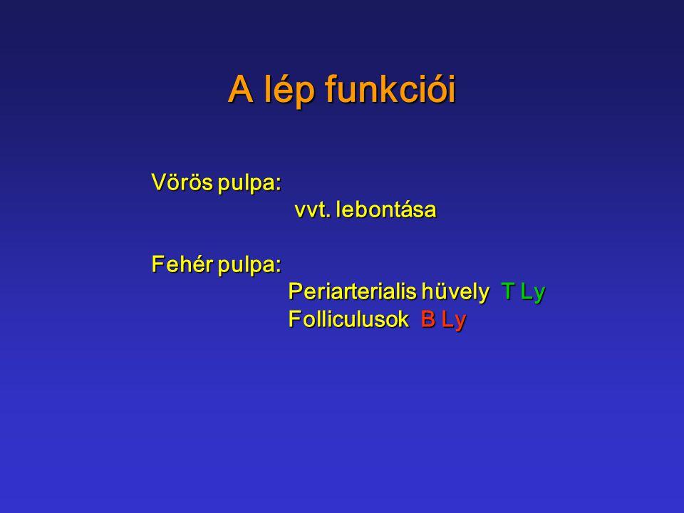 A lép funkciói Vörös pulpa: vvt. lebontása vvt. lebontása Fehér pulpa: Periarterialis hüvely T Ly Folliculusok B Ly