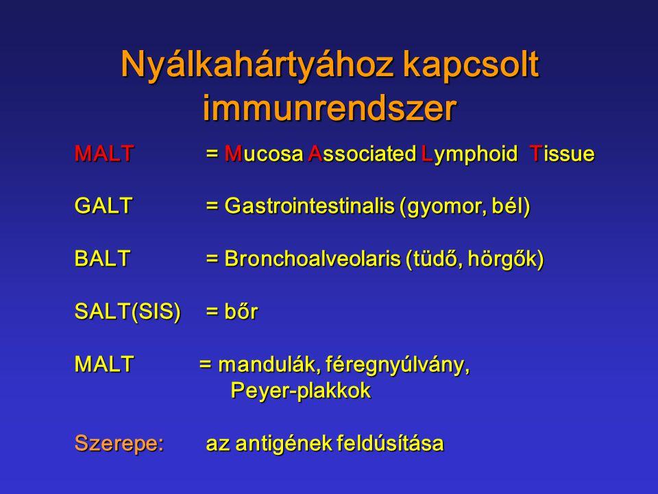Nyálkahártyához kapcsolt immunrendszer MALT= Mucosa Associated Lymphoid Tissue GALT= Gastrointestinalis (gyomor, bél) BALT= Bronchoalveolaris (tüdő, h