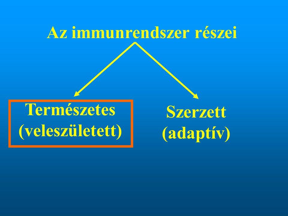 Az immunrendszer részei Természetes (veleszületett) Szerzett (adaptív)
