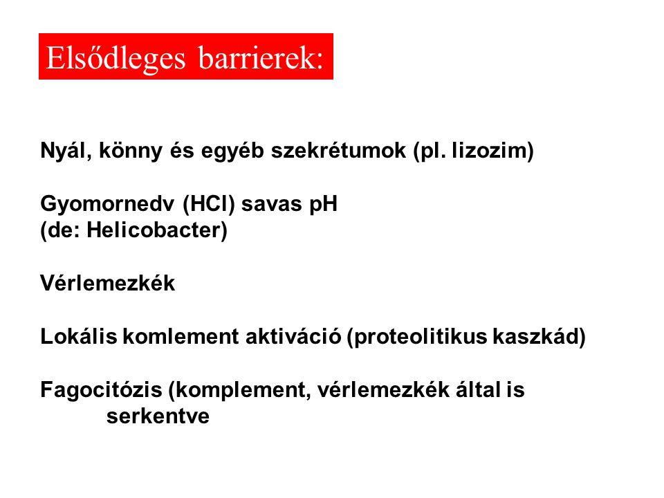 Nyál, könny és egyéb szekrétumok (pl. lizozim) Gyomornedv (HCl) savas pH (de: Helicobacter) Vérlemezkék Lokális komlement aktiváció (proteolitikus kas