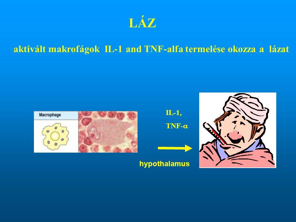 IL-1, TNF-  LÁZ aktivált makrofágok IL-1 and TNF-alfa termelése okozza a lázat hypothalamus
