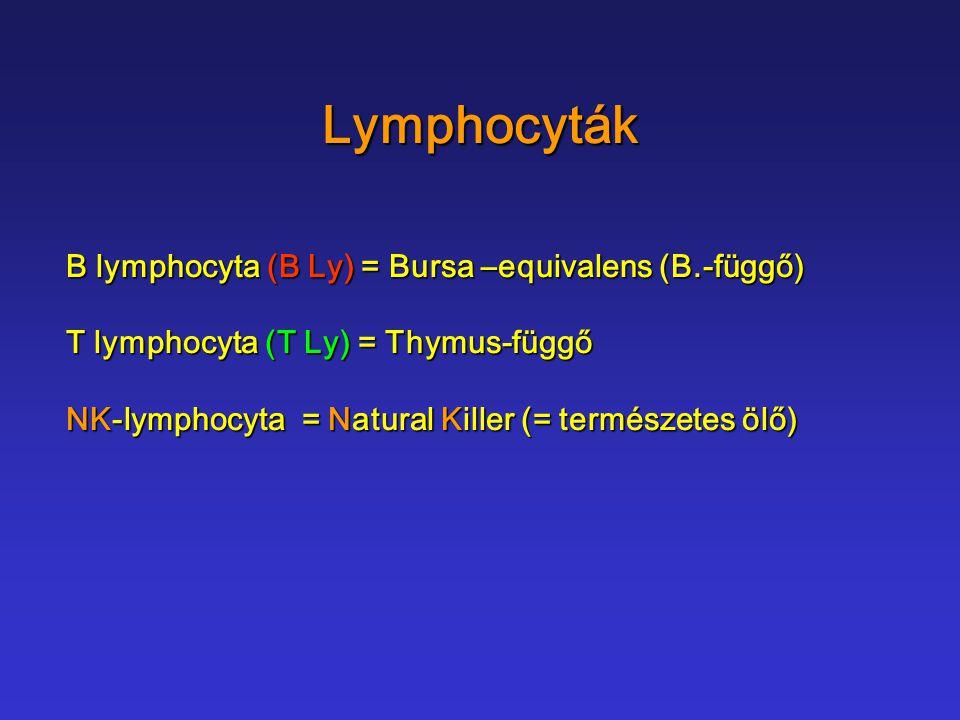 Lymphocyták B lymphocyta (B Ly) = Bursa –equivalens (B.-függő) T lymphocyta (T Ly) = Thymus-függő NK-lymphocyta = Natural Killer (= természetes ölő)