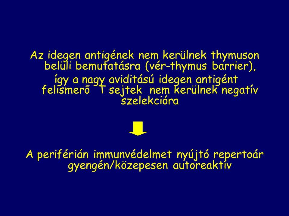 Az idegen antigének nem kerülnek thymuson belüli bemutatásra (vér-thymus barrier), így a nagy aviditású idegen antigént felismerő T sejtek nem kerülnek negatív szelekcióra A periférián immunvédelmet nyújtó repertoár gyengén/közepesen autoreaktív