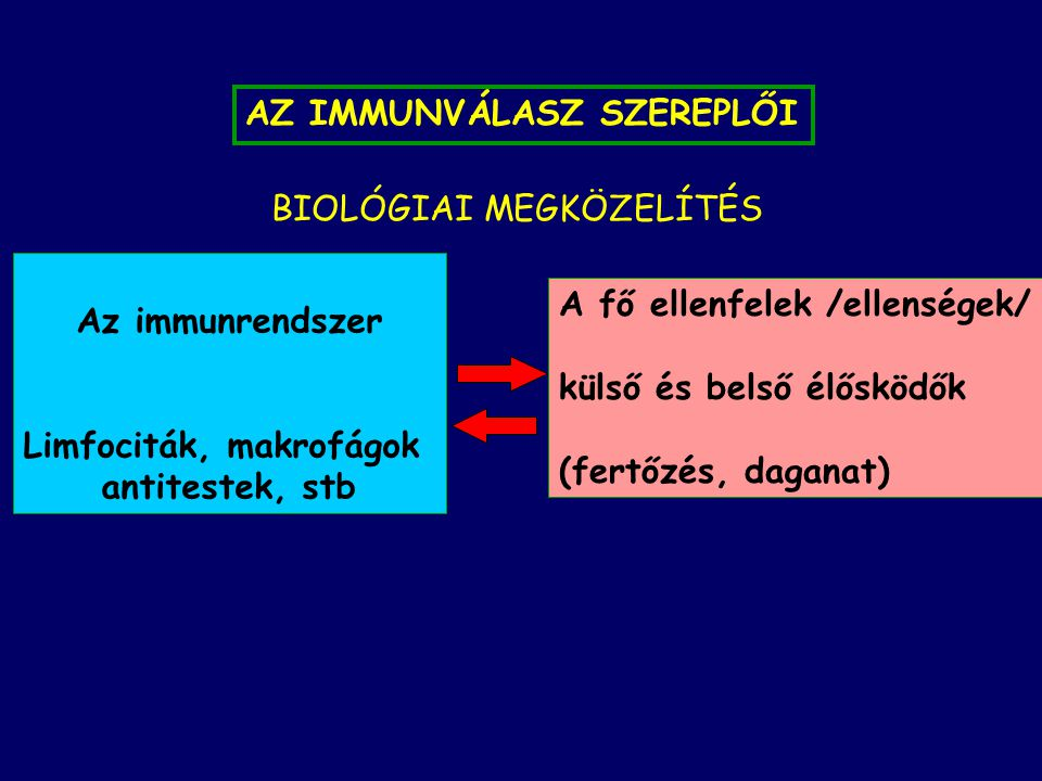 AZ IMMUNVÁLASZ SZEREPLŐI Az immunrendszer Limfociták, makrofágok antitestek, stb A fő ellenfelek /ellenségek/ külső és belső élősködők (fertőzés, daganat) BIOLÓGIAI MEGKÖZELÍTÉS