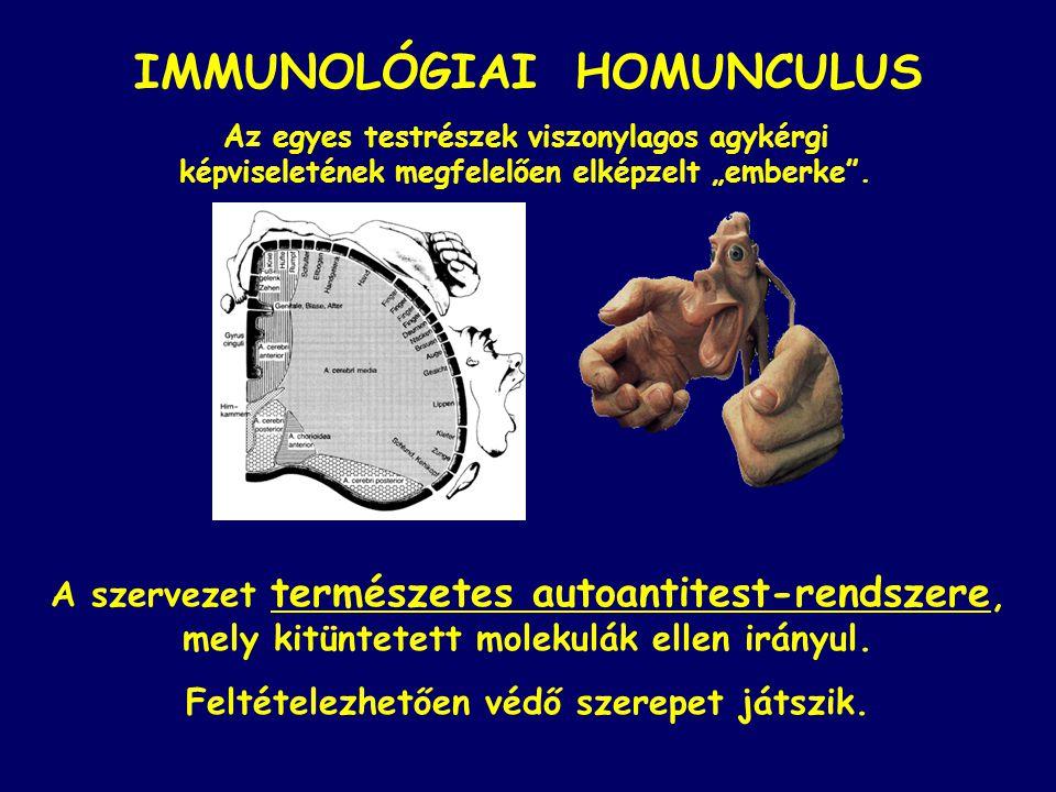 """Az egyes testrészek viszonylagos agykérgi képviseletének megfelelően elképzelt """"emberke"""". IMMUNOLÓGIAI HOMUNCULUS A szervezet természetes autoantitest"""