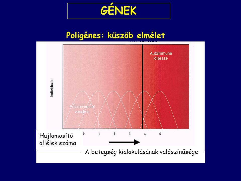 Poligénes: küszöb elmélet Hajlamosító allélek száma A betegség kialakulásának valószínűsége GÉNEK